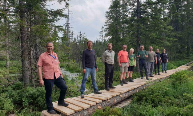 Neuer Steg für das Hirschbäder Moor im Naturschutzgebiet Feldberg