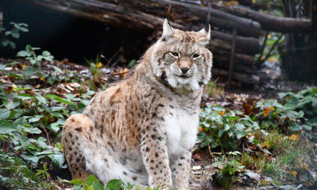 Wie gefährlich sind Waldtiere?