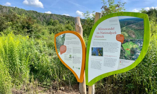 Infotafeln zum Klimawandel im Nationalpark Hainich