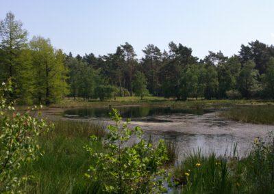Heidemoor am Galgenvenn