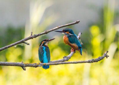 Vogelbeobachtung an den Ophovener Baggerseen