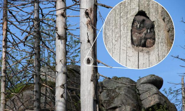Totholz ist Leben – neue Artenvielfalt im Wald