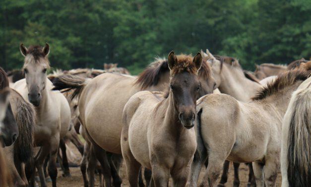Blaue Perlen – Der Unterlauf der Schwalm in den Niederlanden
